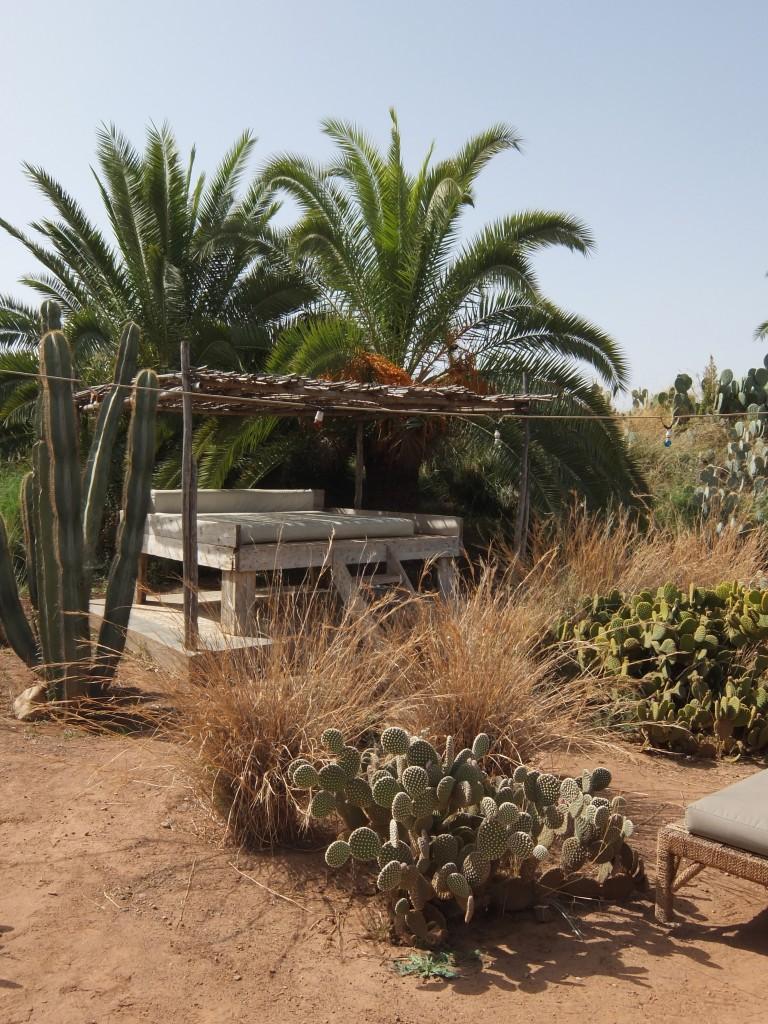 Fellah_Cactus Garden Lounge